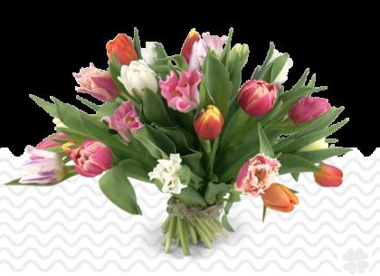 exclusieve tulpen