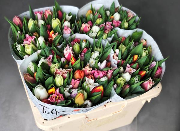 grote-bestellingen-tulpen