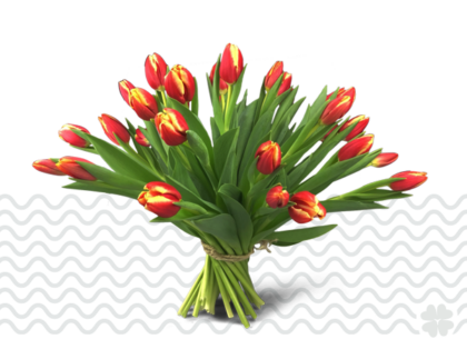 rood gele tulpen