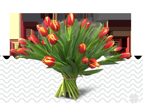 Tulpen-zonder-bol