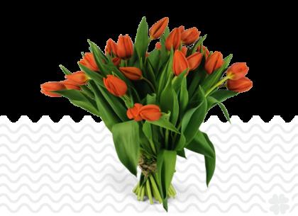 oranje-tulpen-bestellen