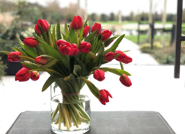Tulpen-bezorgen-aan-huis-vers