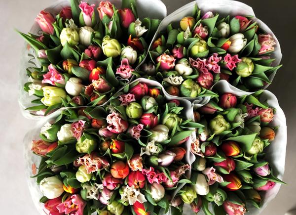 Grote bestellingen-tulpen