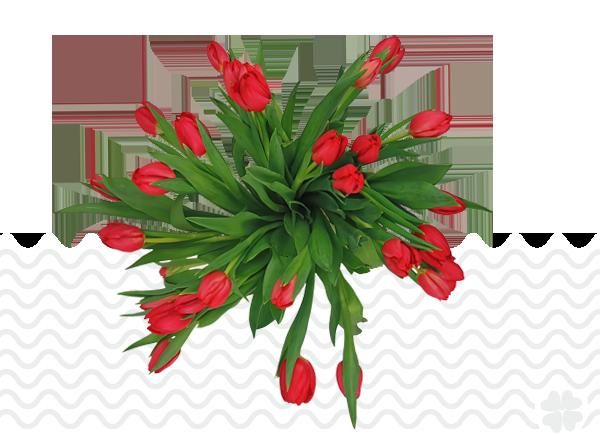 tulipa_red_mark