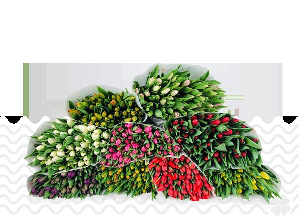 DIY-mengboeket-200-tulpen