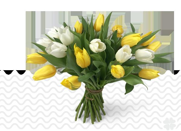 Tulpen-bezorgen-in-Capelle-aan-de-IJssel