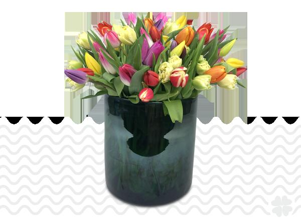 Tulpen-bestellen-in-Schiedam