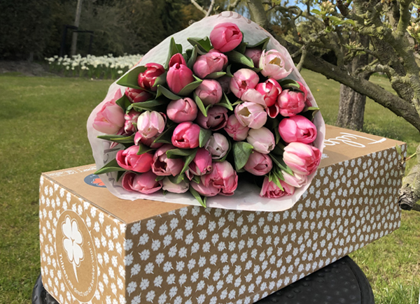 Tulpen-in-Rijswijk-kopen