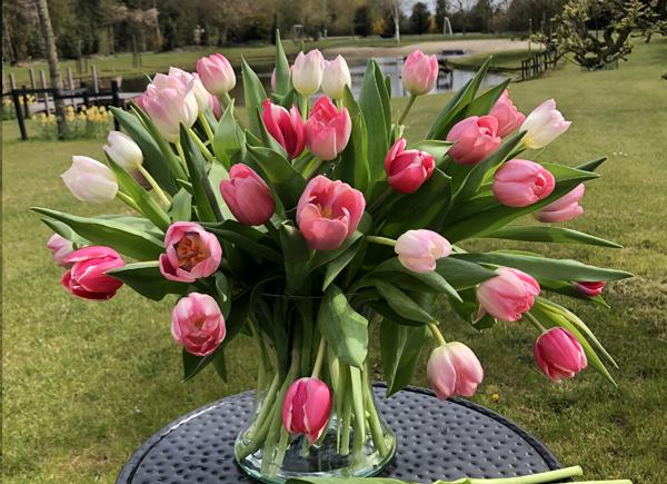 tulpen online bestellen